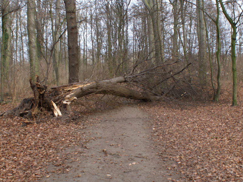 12/2016: Sturmschäden im Bornumer Holz